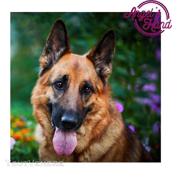 5d bricolage diamant peinture berger allemand chien, 5d diam 0