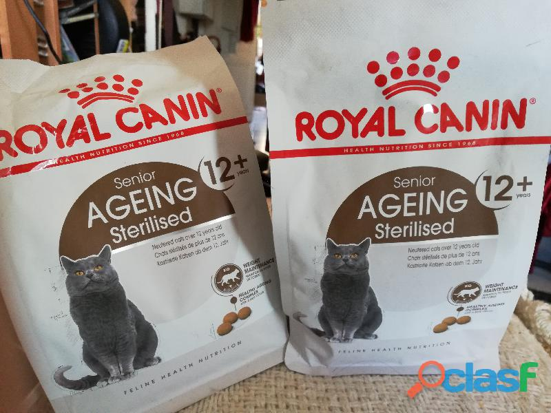Croquettes pour chat senior royal canin