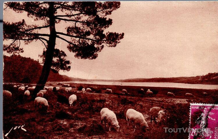 Carte postale de hossegor (landes) pâturage au bord du lac