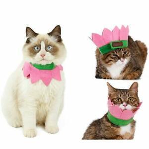 Victorie collier chapeau fête chat chien animaux compagnie