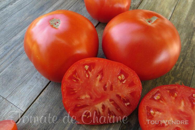 10 graines de tomate rare William Striped charnue douce fruitée heirloom tomato