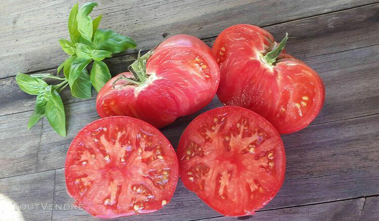 10 graines de tomate rare rose de moldavie heirloom tomato s