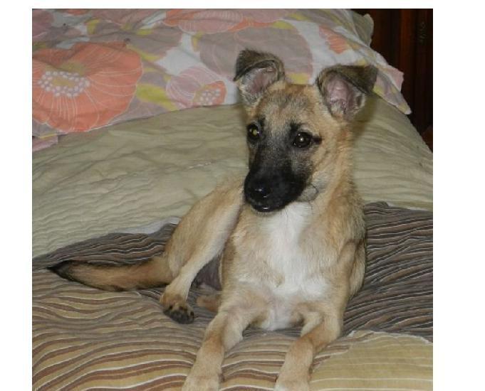association pour adoption chienne poupette