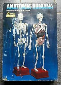 Jeu genre anatomie 2000 anatomie humaine échelle 1:3 - 59