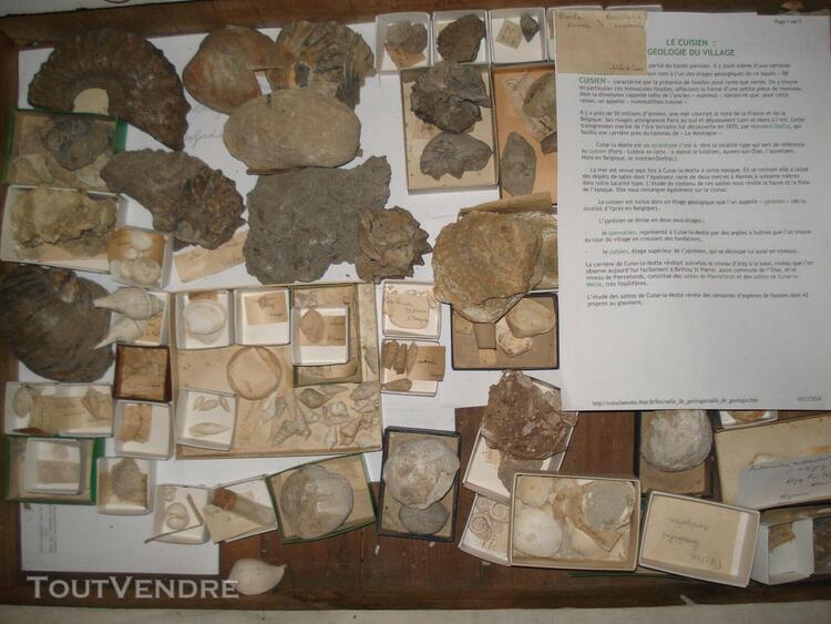 Collection ancienne xixèmefossiles stampien bathonien
