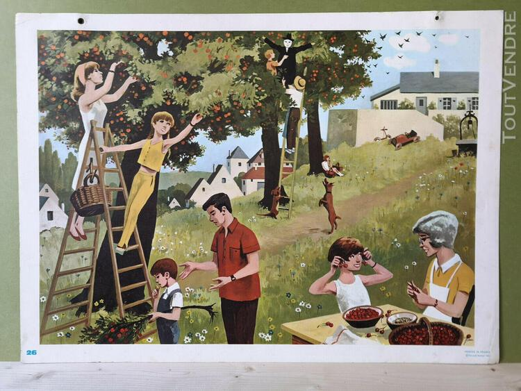Affiche scolaire fernand nathan 1966 cueillette des fruits e