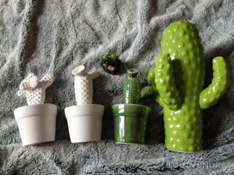 Lot de cactus décoratifs