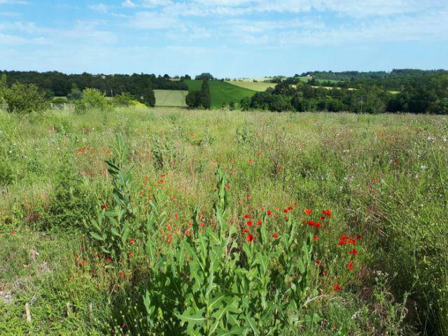 Parcelle de terre d'un hectare environ