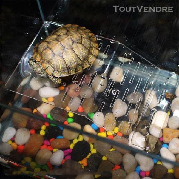 Transparent tortue crawler toit terrasse terrasse tortue pis