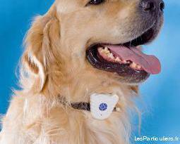 Collier chien anti-aboiement neuf
