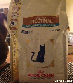 Croquettes specifiques pour chat royal canin