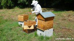 colonies - essaims - abeilles