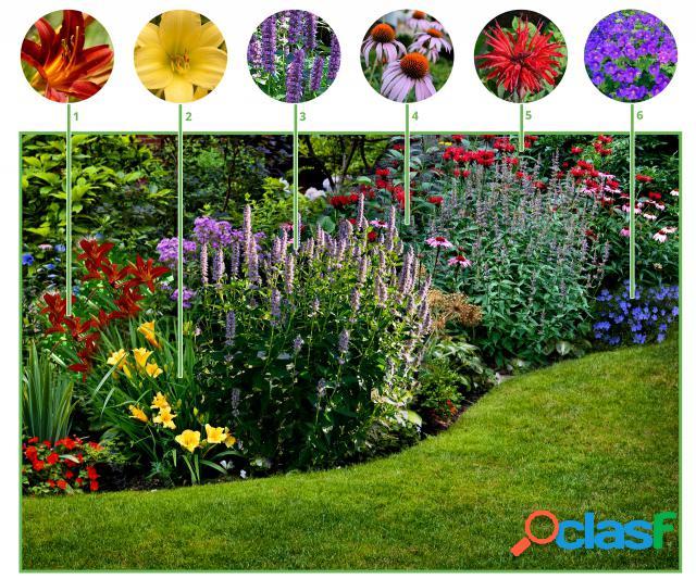Paquet de plate-bande pour plate-bande ã longue floraison (12 plantes)