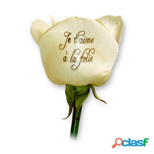 Livraison fleurs et roses blanches imprimã©es