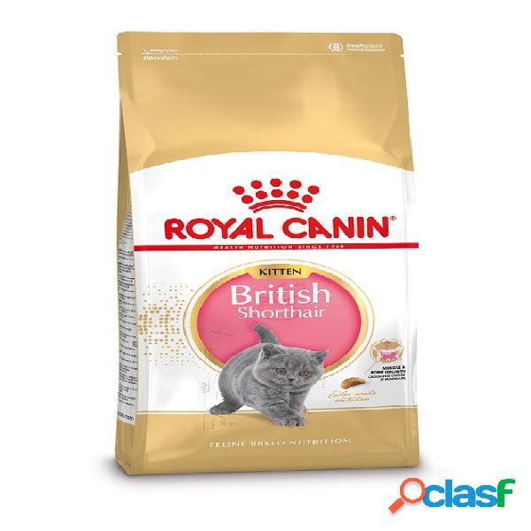 Royal canin kitten british shorthair pour chaton 10 kg