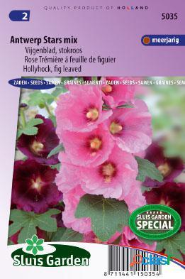 Rose trã©miã¨re simple ã feuille de figuier antwerp stars mix - alcea ficifolia