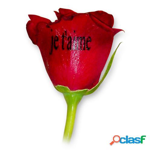 Livraison de roses rouges imprimã©es