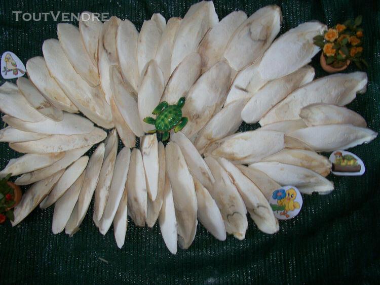 Os de seiche 1 kg 15-22 cm perruche mandarin calopsitte re