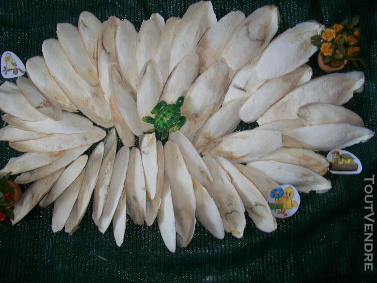 Os de seiche 2 kg 14-22 cm perruche mandarin calopsitte rept