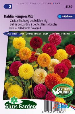 Dahlia de jardins ã petites fleurs doubles pompon mix