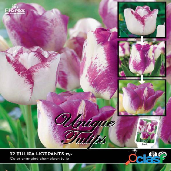 Tulipe hotpants (camã©lã©on)