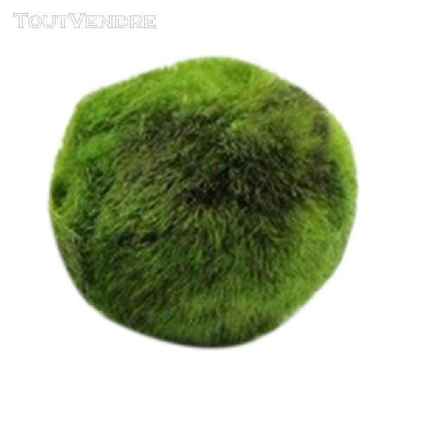 Algues vertes boule aquarium aménagement paysager