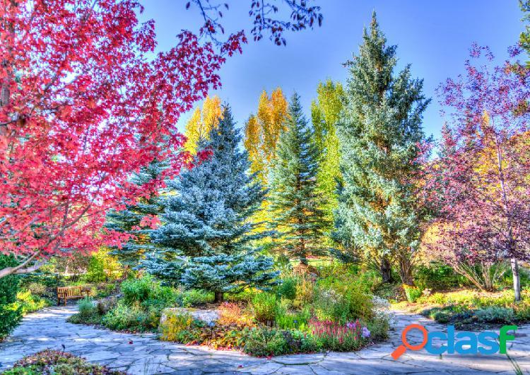 Puzzle forêt colorée, colorado, usa grafika