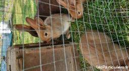 croisés fauve de bourgogne et lapin chèvre