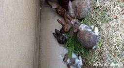 lapins fermiers