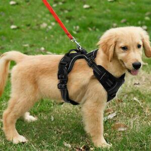 Harnais chien anti traction pour gros grande moyen petite s
